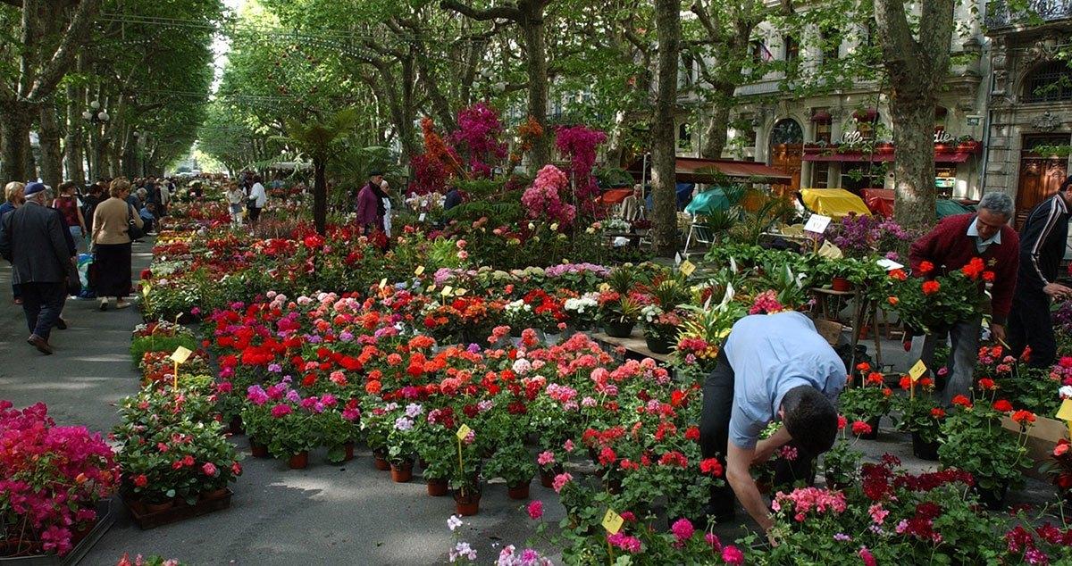 Bloemenmarkt Béziers